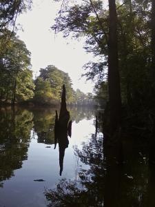 Steeple Reflection